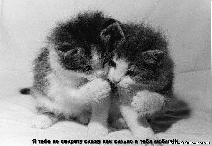 http://best-picture.ucoz.ru/_ph/21/966859953.jpg
