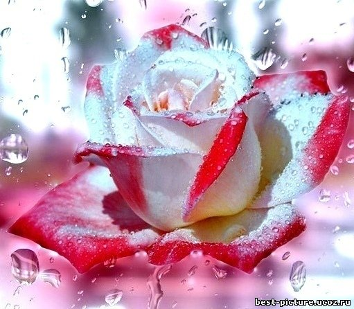 http://best-picture.ucoz.ru/_ph/28/482871198.jpg