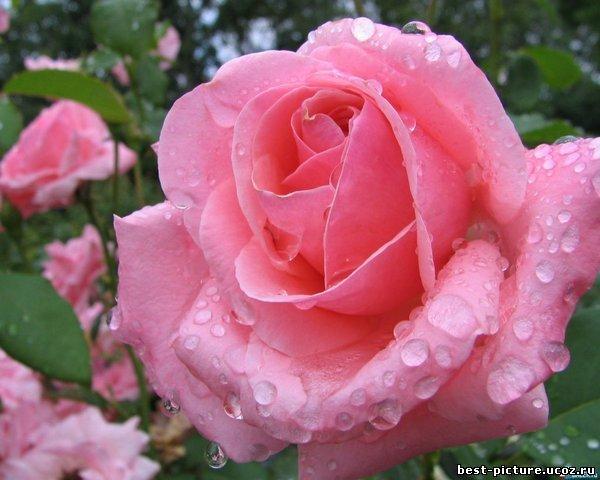 http://best-picture.ucoz.ru/_ph/28/738743495.jpg