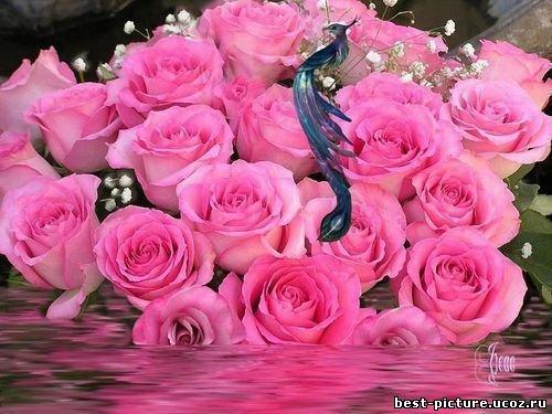 http://best-picture.ucoz.ru/_ph/29/2/827007455.jpg